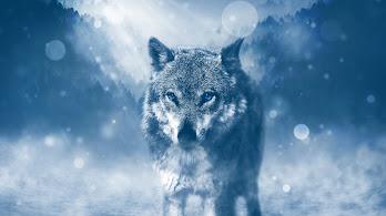 Wolf, 4K, 3840x2160, #54