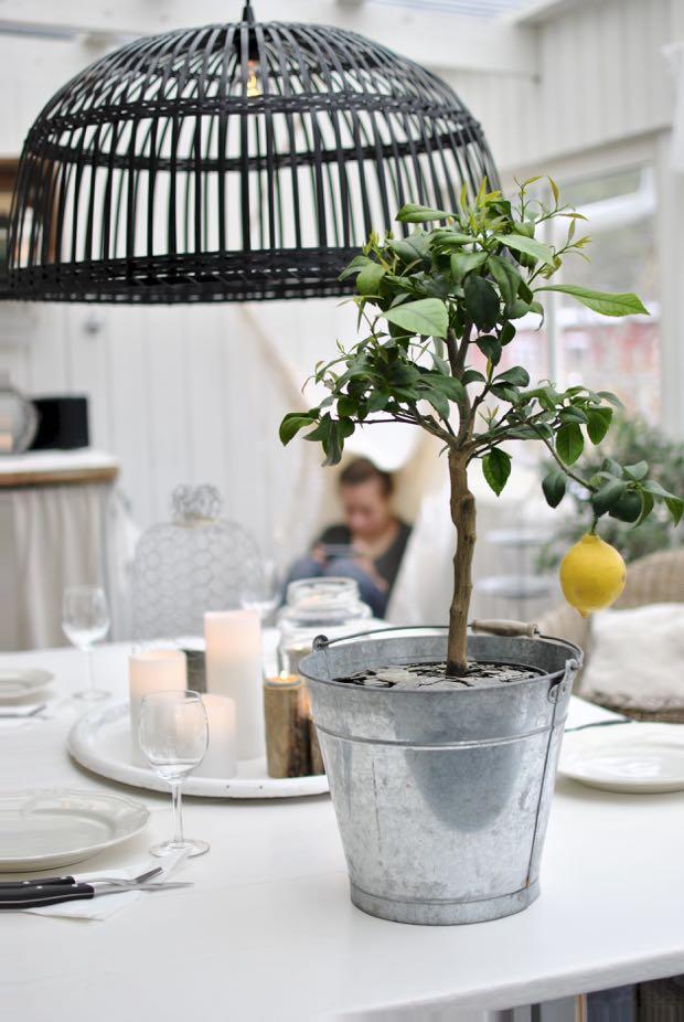 hannashantverk.blogspot.se citronträd uterum orangeri matbord