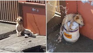 Άντρας έδεσε με αλυσίδα τον σκύλο του και τον παράτησε μέσα στον καύσωνα να του φυλάει το σπίτι