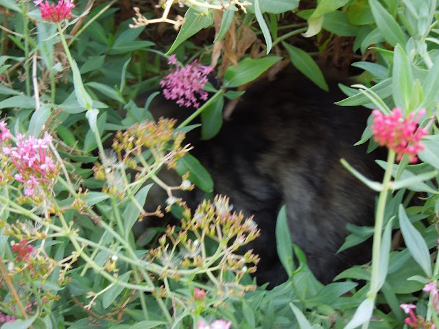 Fur in the Flowers at Peachy Canyon Tasting Room, © B. Radisavljevic