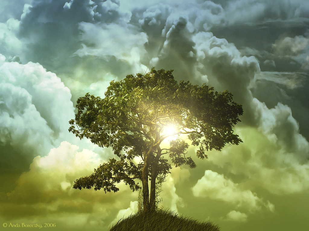 Scripturesight The Tree Of Life