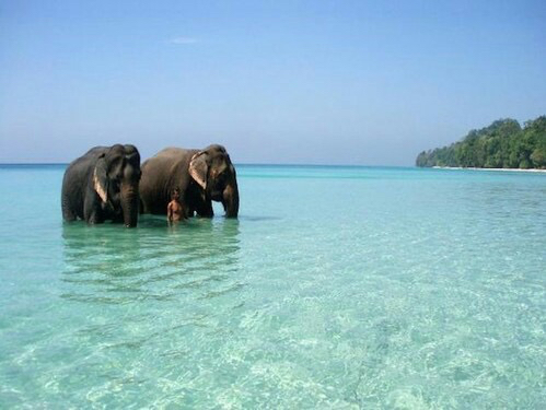 Wandering on the shore at Elephant Beach