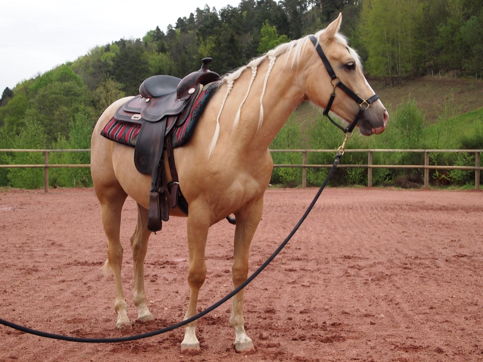 خيول كوارتر الأمريكية
