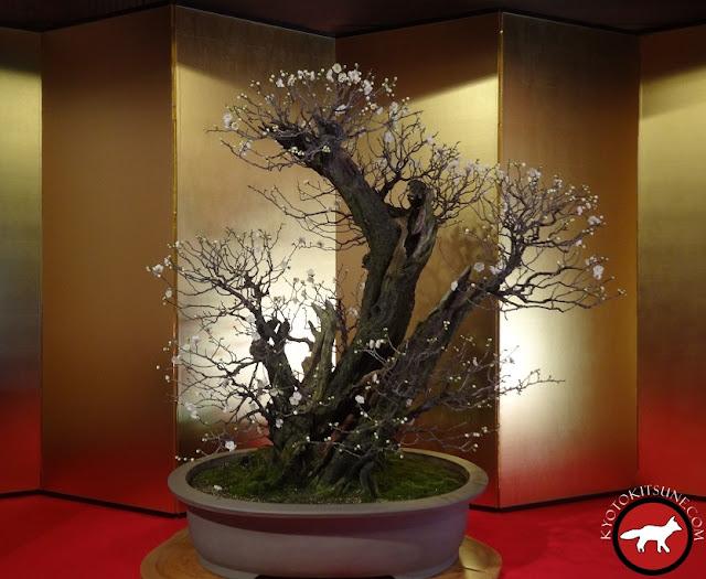 Bonsaï de prunier exposition au Japon