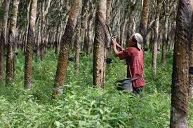 Sumber daya alam Indonesia