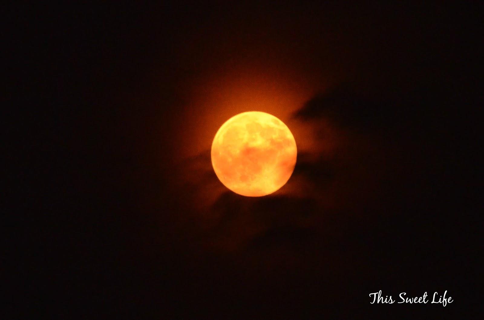red moon blue sun book - photo #21