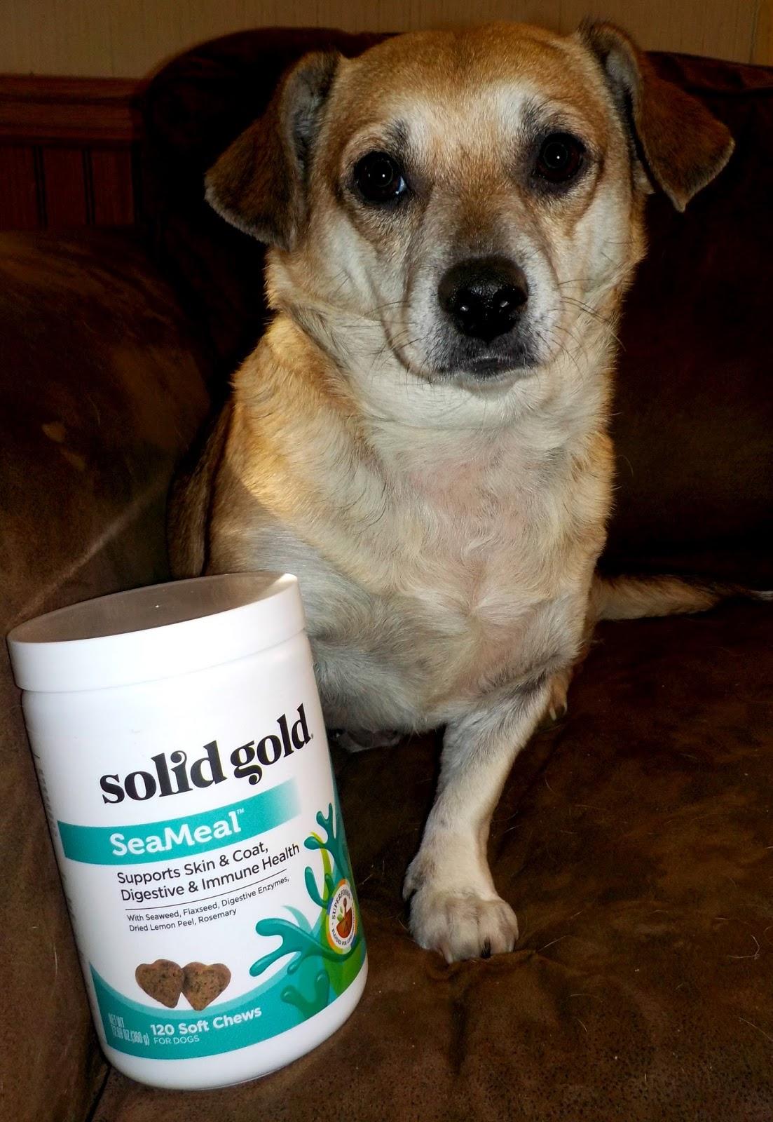 Grain Free Pet Food Myth