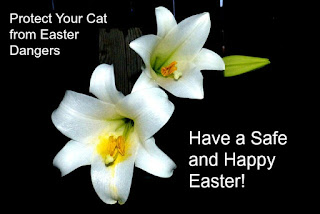 "An Easter Lily graphic that says, ""Protect Your Cat from Easter Dangers."""