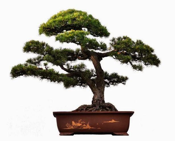 What Is Bonsai?