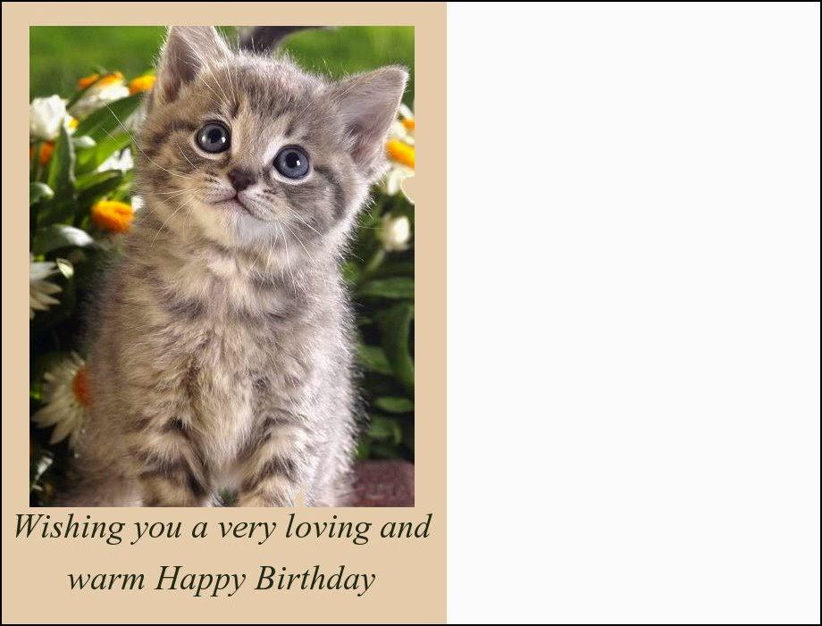 Favoloso Gatti: Cartoline gatti di Buon Compleanno BH81