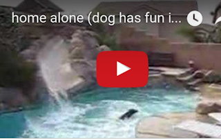 img Funny dog swimming pool  video home alone screenshot