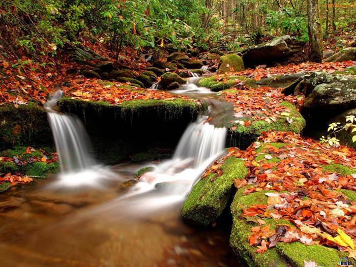 Nature HD Wallpapers Free Wallpaper Downloads