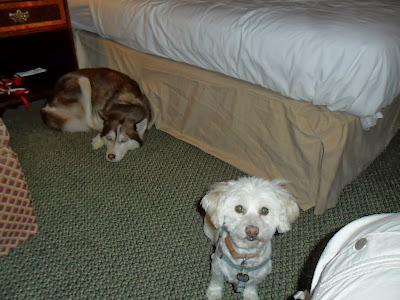Pet friendly hotels, Dog friendly, Travel with dogs, Travelling