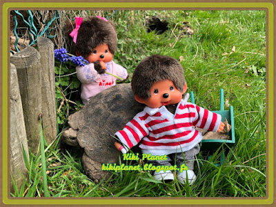 monchhichi, bebichhichi sekiguchi kiki jardin tortue de terre, tortue carapace kauri