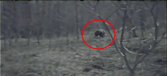 El Rincon Paranormal: El unico Hombre Lobo Real Capturado ...