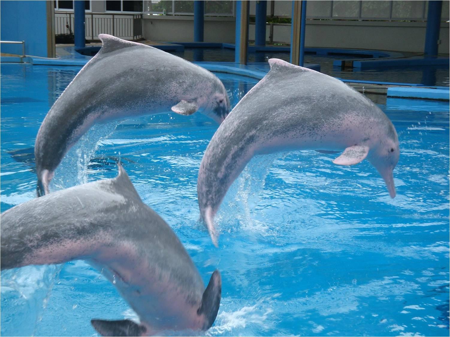 Pasyalan at Potograpiya: Singapore: Dolphin Show in Sentosa