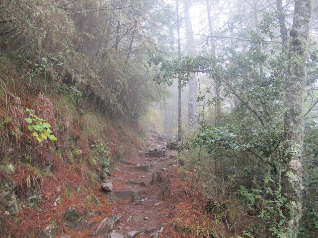 IMG 6058 - 台中登山│台灣第二高峰,雪山主峰、東峰兩天一夜攻頂!這兩天是我最難熬的一夜