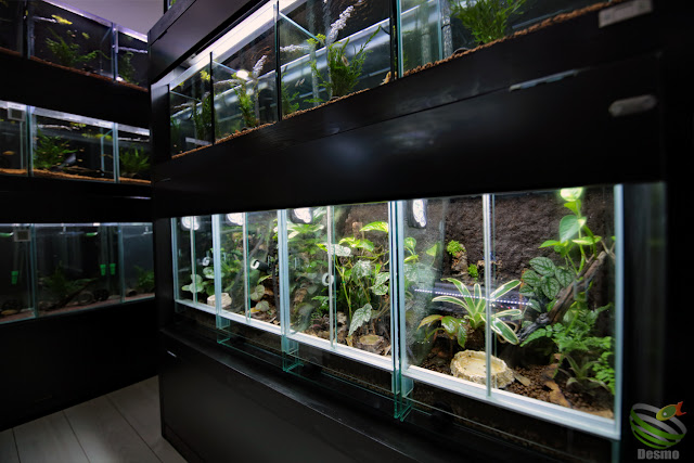 poison-dart frog cage
