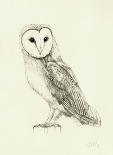 """To create is to breathe: """"Wesley"""" Barn Owl drawing"""