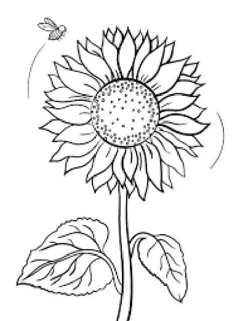 84 Gaya Terbaru Sketsa Kolase Bunga Matahari Sketsa Bunga