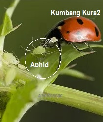 Life Cycle Of Ladybug For Kids Youtube