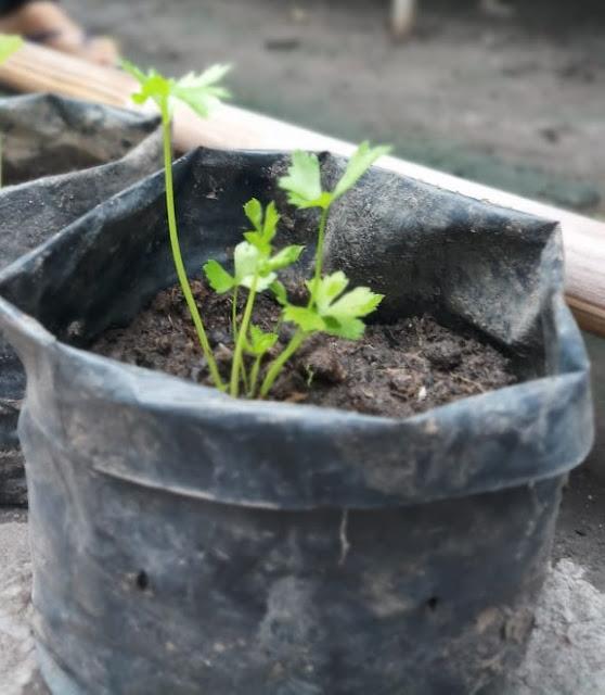 Belajar Tentang Lingkungan Hijau dari Kampung Randakari, Cilegon