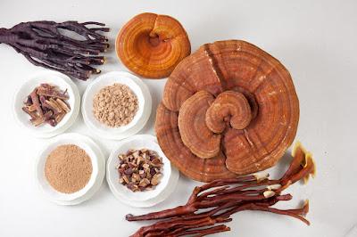 Thảo dược nấm linh chi đỏ trị bệnh dân gian sỏi thận