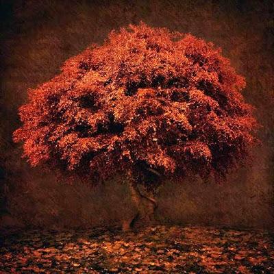 árbol hecho con retoque digital