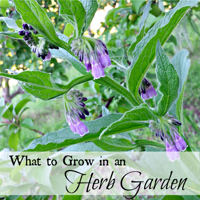 What to grow in an herb garden.