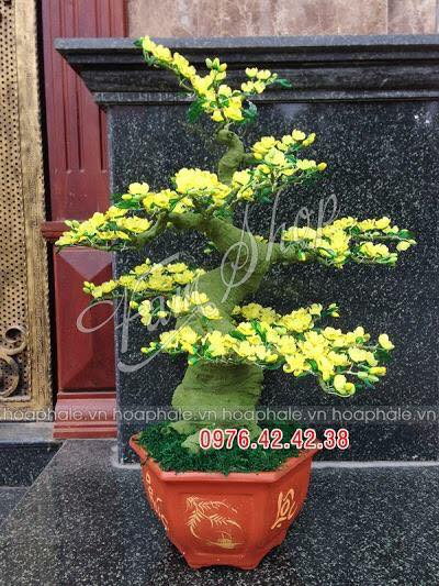 Goc bonsai cay hoa mai o Hang Buom