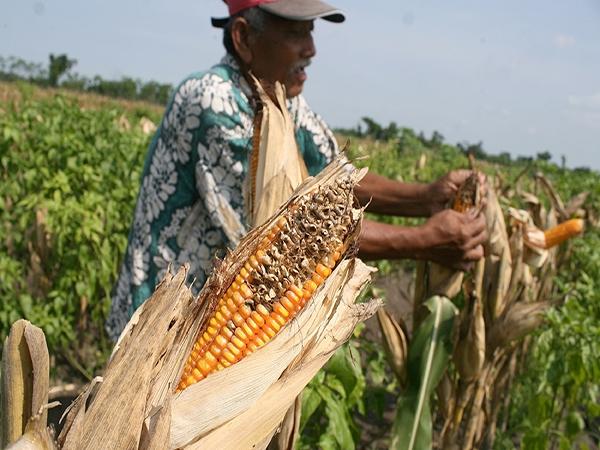 Rotasi Tanaman, Solusi Pertanian Yang Berkelanjutan