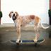 Maddie, a cachorra mais aventureira e carismática da internet