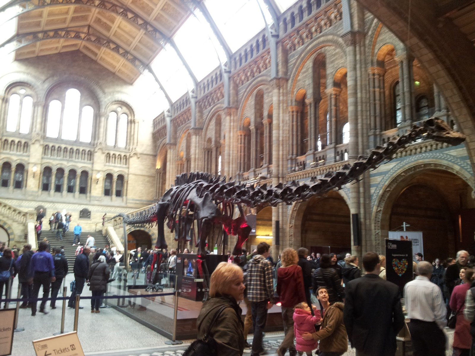 Natural History Museum Londone Dinosaur Skeleton