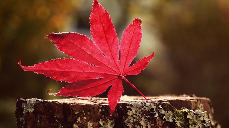 One of the Autumn Symbols