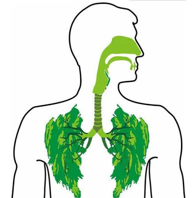 اعشاب تنظف الرئتين وتعالج الجهاز التنفسي .