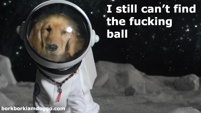 Doggo On The Moon