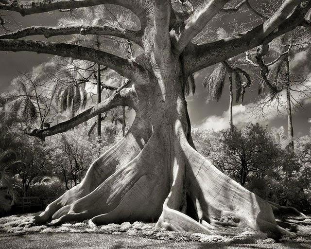 Najljepsa stoljetna stabla