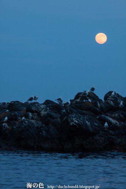 トド岩で休むカモメと満月