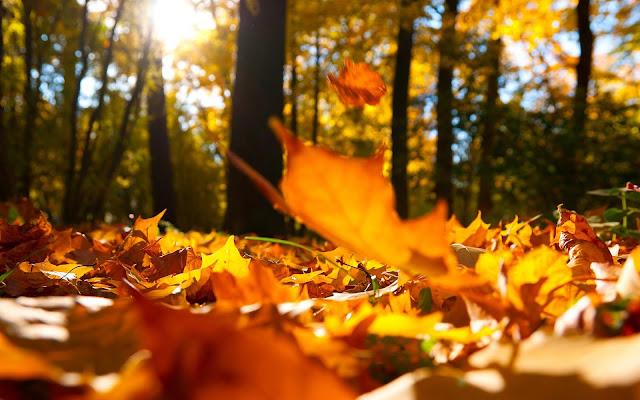 Foto van oranje herfstbladeren op de grond
