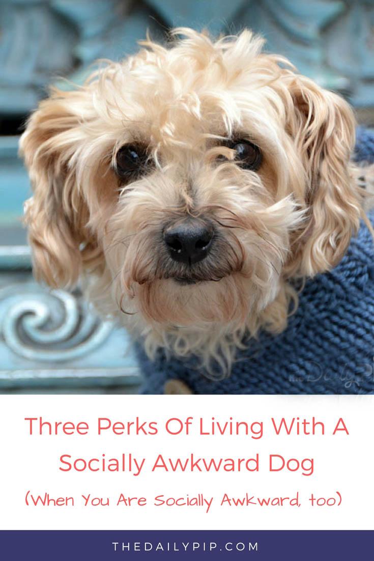 The joys of living with a socially awkward dog and how having a socially awkward dog makes life easier if you are socially awkward, too