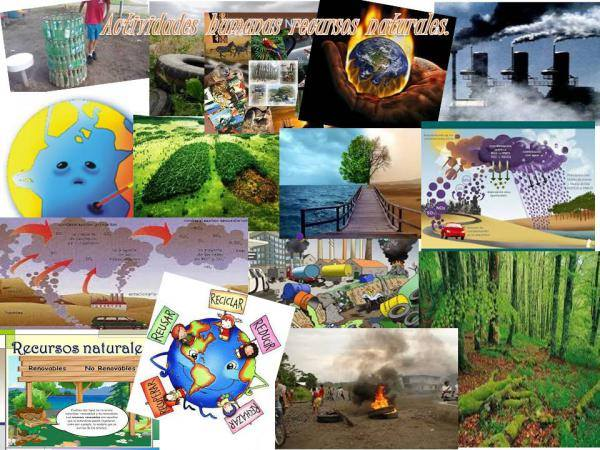 Dinámica De Ecosistema