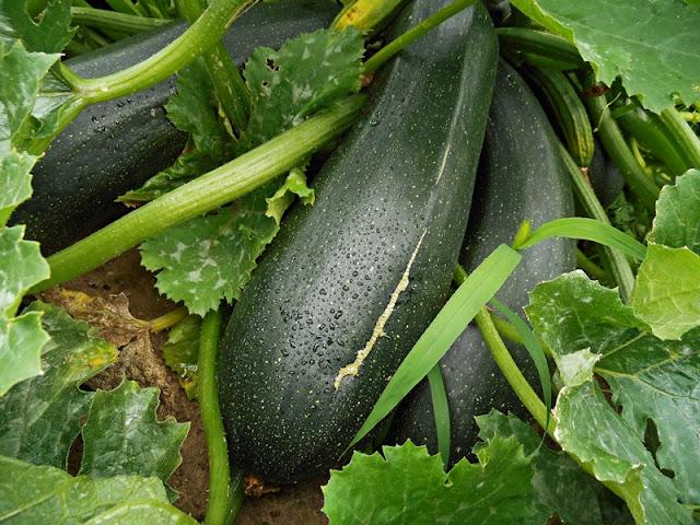 warzywa w ogrodzie, potrawy, ciekawe warzywa