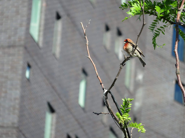 Bird on the High Line in Manhattan