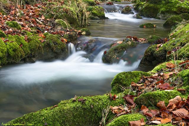 Río y hojas de haya