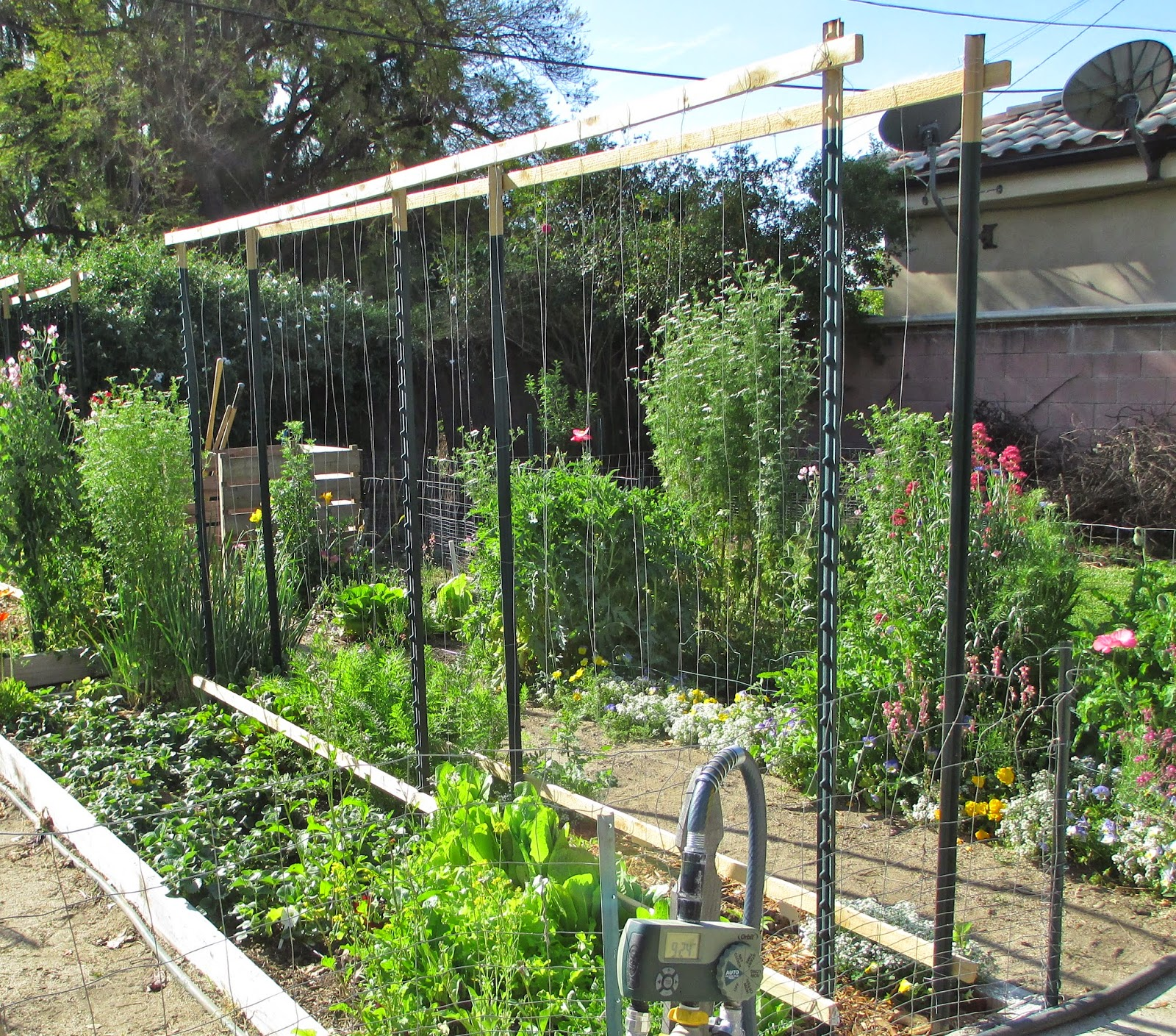 Andie's Way: Trellis Ideas For Tomatoes, Cucumbers, Beans