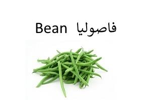 فاصوليا : Bean