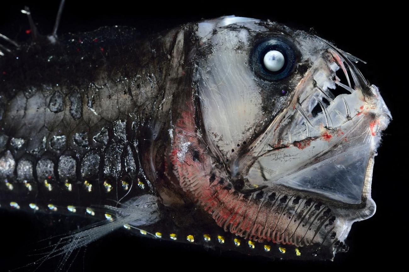 Рыба монстр картинка