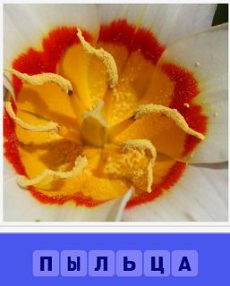 бутон цветка, в котором находится пыльца желтого цвета