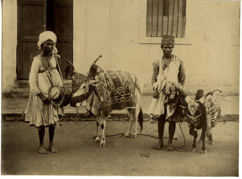 Two Male Entertainer with Decorated Cow and Goat - Pondicherry 1880's