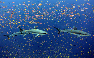 9 Unbelievable Facts About Sharks
